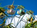 weeds-and-rides-long-way-still-until-nature-reclaims-abandoned-6-Flags